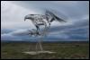 Macraes Haasta Eagle