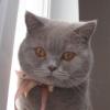 olya_yara: кот