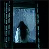 fuchsia by the window