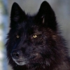 kieranwolf userpic