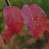 green_knight: Autumn