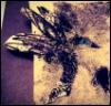 kond_e: Птица