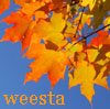 weesta - autumn leaves