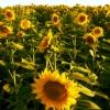 bulgarialove userpic