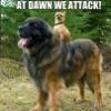 Eli/Ellie/ellie_nor: dawn attack!