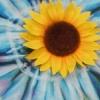 marakaki45 userpic