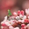 dryadas userpic