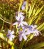 ночная принцесса, цветочки, весна 2015, солнечная погода