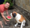 Feeding watermelon to a fake dog