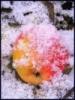 """""""Яблоки на снегу"""""""