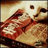 HP: cat Harry potter