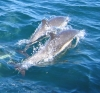 dolphinchaser userpic