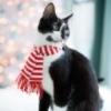 cat in muffler