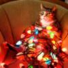 lit cat
