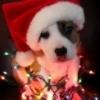 lit dog