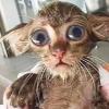 Мокрый котенок