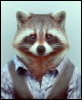raccoonwilley userpic