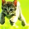 STOCK: kitten springing