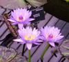 botanic_light