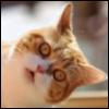 kwakin_misha