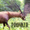 pronker [userpic]