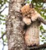 Рысенок спит