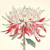 redwallflower92 userpic