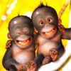 eyesonstars: grinning monkeys