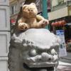 chinatown bear