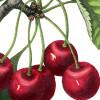 cherry_pickford userpic