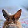 leesa_perrie: Bunny Ears
