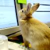 leesa_perrie: Bunny Computer