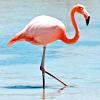 leesa_perrie: Flamingo