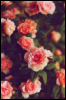 Цветы вдохновляют