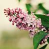 lavenderpoem userpic