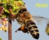 сон на пчёлах, ульетерапия, апитерапия, Одесса, сон на ульях
