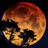 Африканская Луна