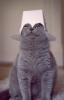 i_say_sos userpic