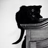 black_cat_28_shkaf