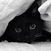 black_cat_29_puff