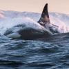 northernwhale0 userpic