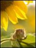 внутренняя мышь