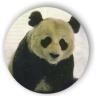 teh_panda userpic