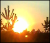 irinalibro: Вечернее солнце