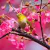 goldfinch and pink flowers