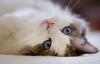 eliza_mihaylova userpic