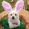 Shirebound: Easter Pup - casey28