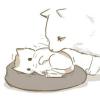 дикий кот в мире теней