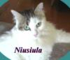 Niusiula в овале
