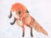 paraskevi_fox